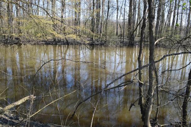 Istraživanje vodozemaca i gmazova na području šume Žutice