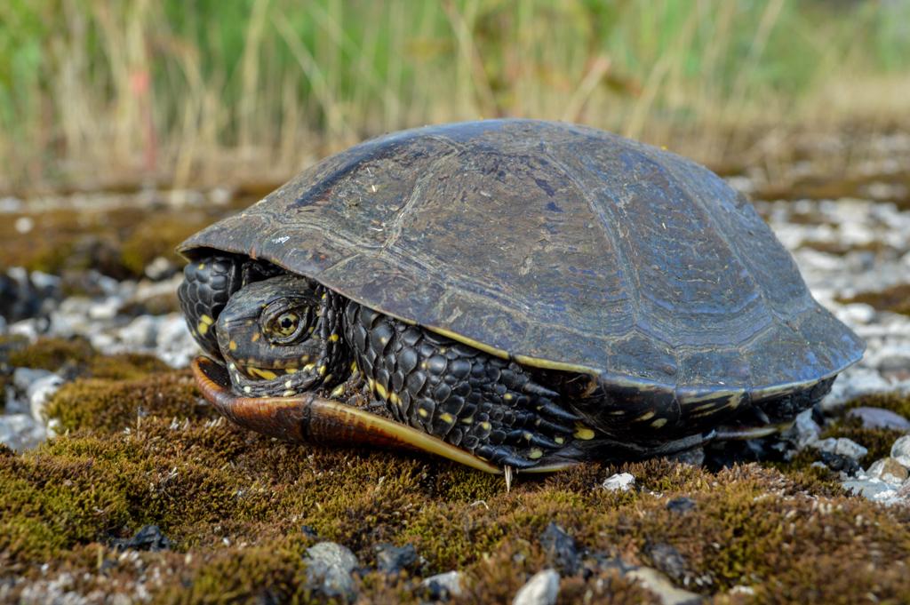 Egzotične kornjače: Kad ljudi iz ljubimaca stvore problem
